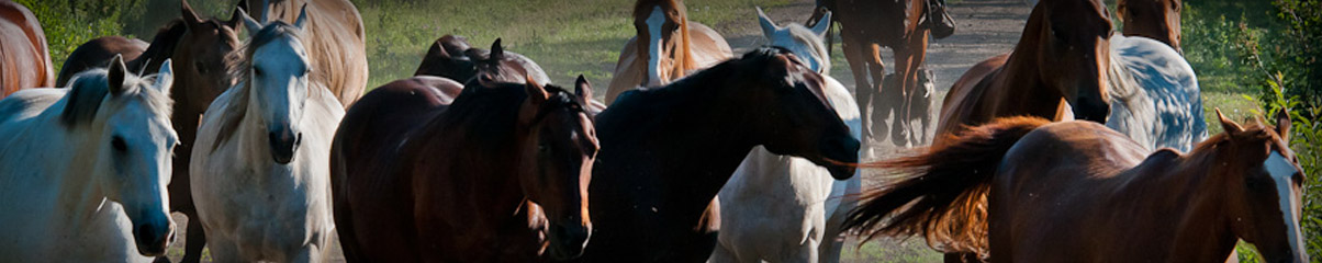 montana_ranches_header_1