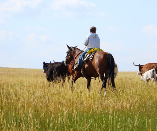 montana rancher dating You have a lot of options of where to stay in montana but where can you get the ranch-style guest your overnight donation to stay with us.