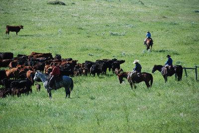 Montana Ranch Vacations Padlock Ranch Cowboy School