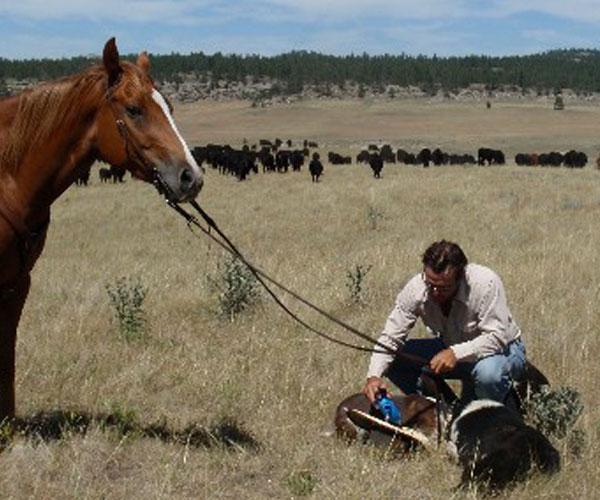 Montana Ranch Vacations