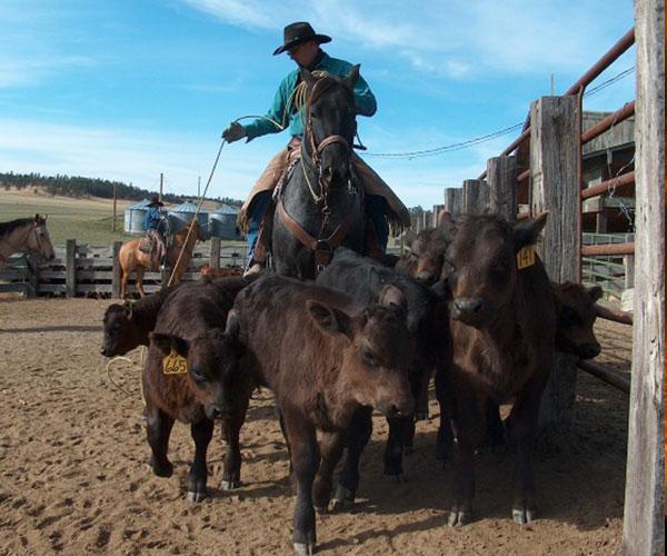 Montana rancher dating